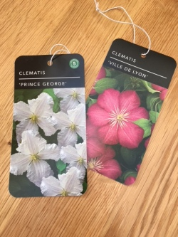 clematis label
